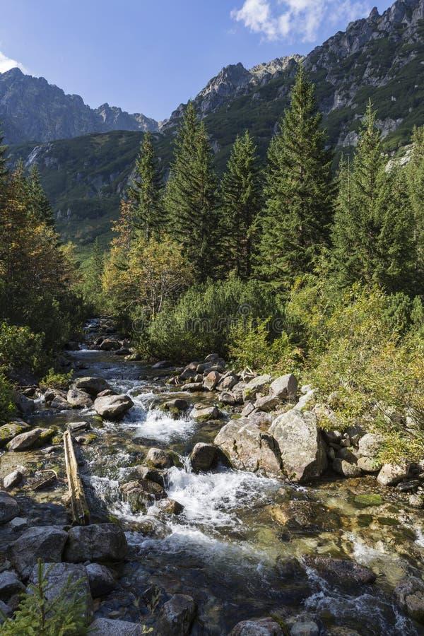 Поток Roztoka в долине Roztoka Национальный парк Tatra Высокое Tatr стоковая фотография rf