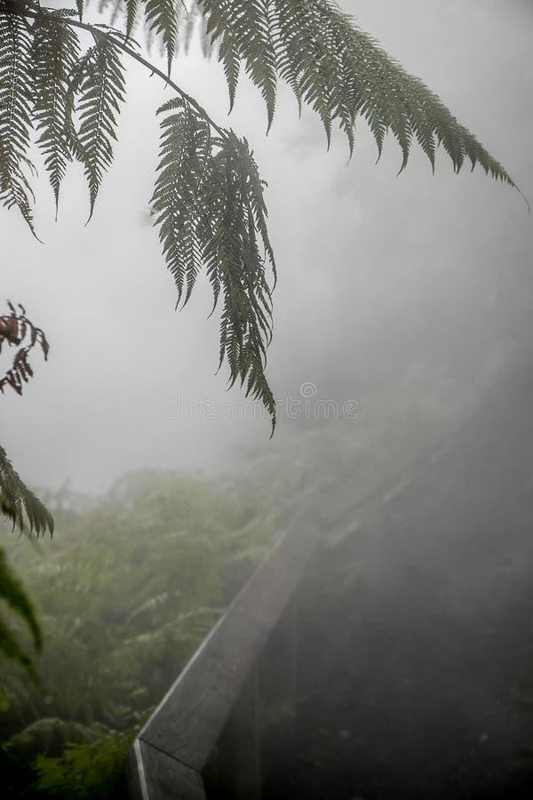 Поток Waikite горячие и террасы, вулканическая долина стоковое изображение