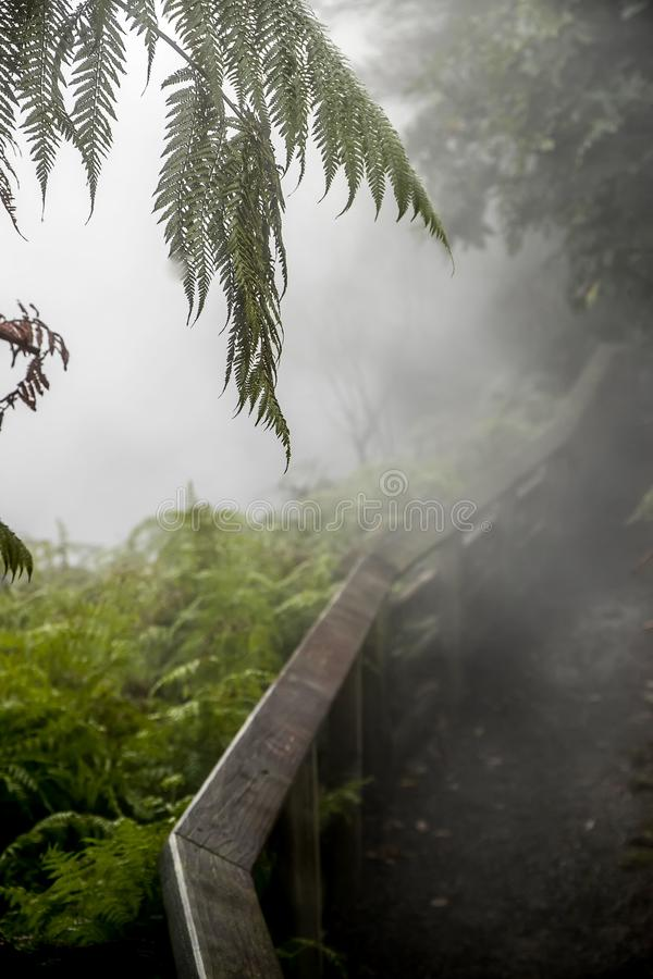 Поток Waikite горячие и террасы, вулканическая долина стоковые фотографии rf