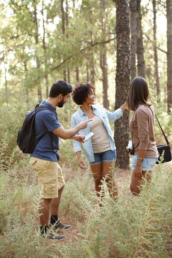 3 потревоженных друз в лесе стоковые фото