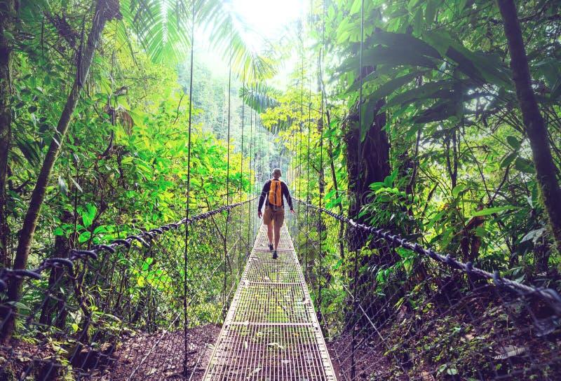 Поход в Коста-Рика стоковые фотографии rf