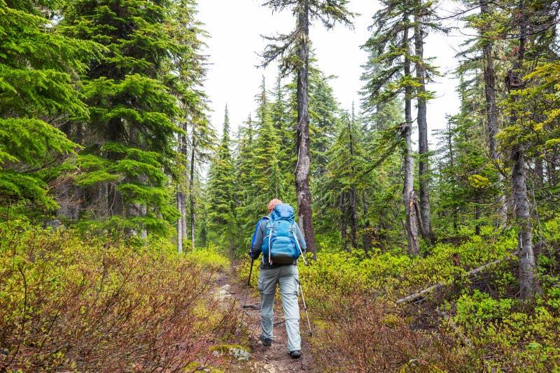 Поход в лесе стоковые фотографии rf