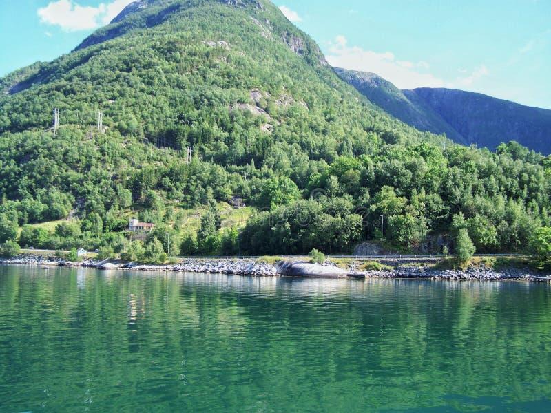 Поход природы в древесинах, вода фьорда, предпосылки солнечного дня стоковые изображения rf