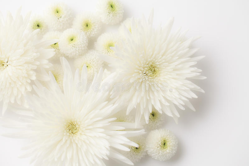 Похоронные цветки стоковые фотографии rf