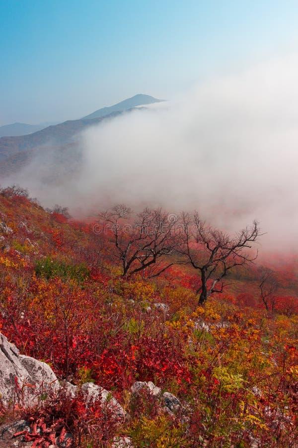 поход гора в территории Primorskoi сестры стоковые фото