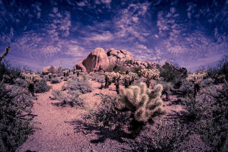 Поход горной тропы пустыни в Аризоне стоковые изображения