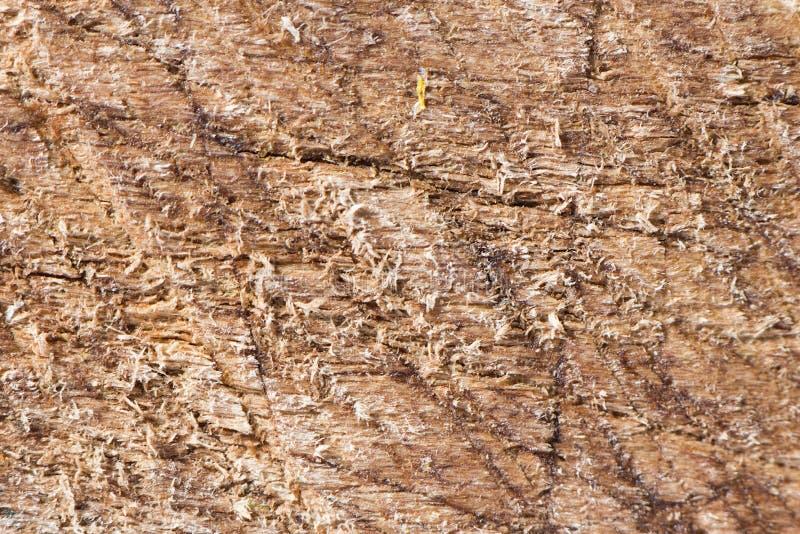 поцарапанная древесина текстуры стоковое фото