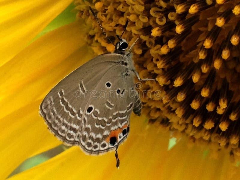 Поцелуй от бабочки стоковое изображение rf