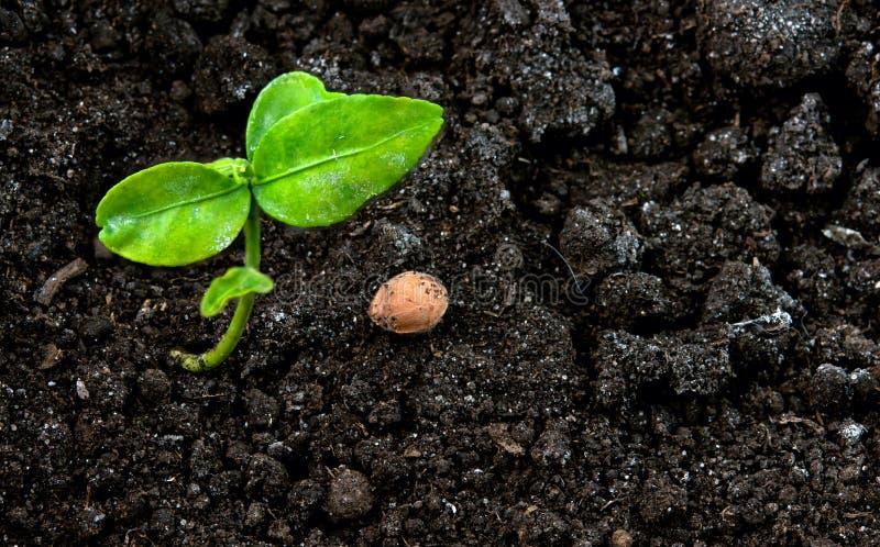 почва зеленого завода стоковая фотография