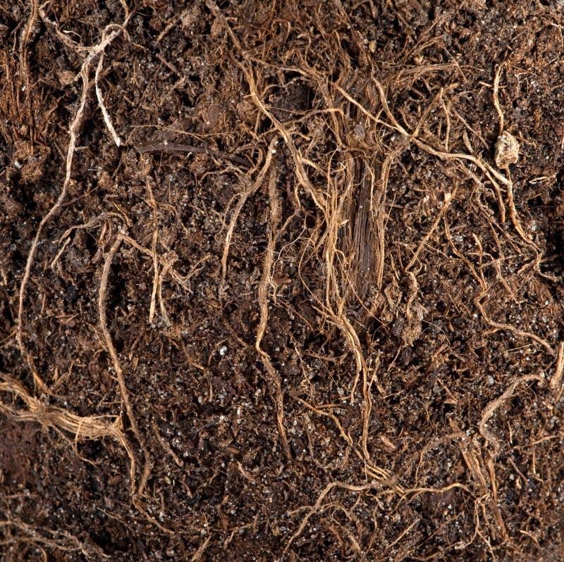 почва корней стоковая фотография