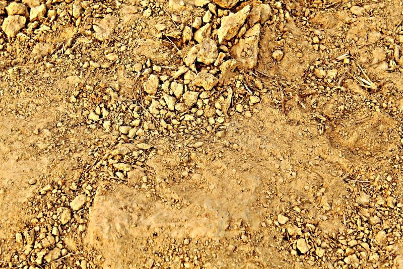 Почва после земледелия зерен риса стоковые изображения rf