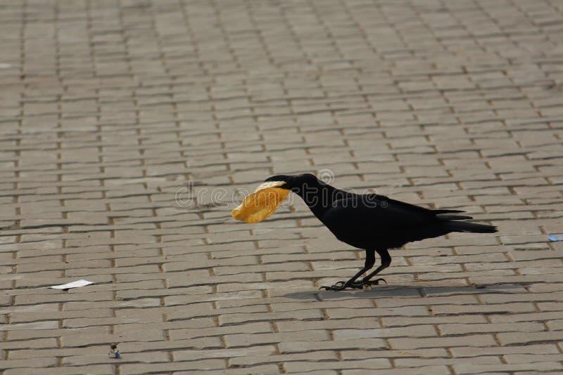 Почерните птицу стоковые изображения rf