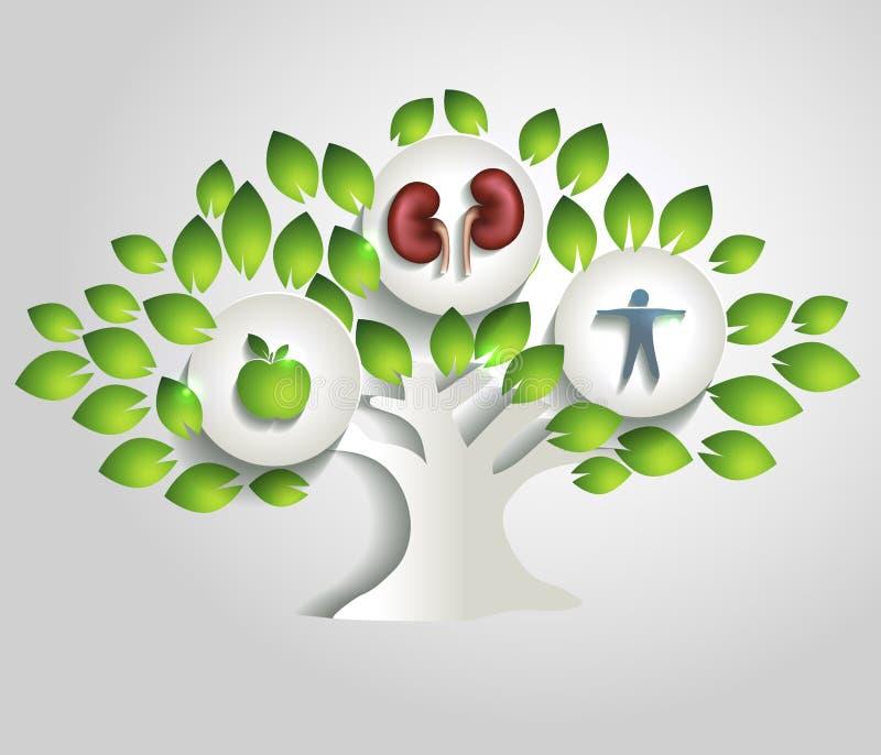 Почки и дерево, здоровая концепция образа жизни иллюстрация вектора