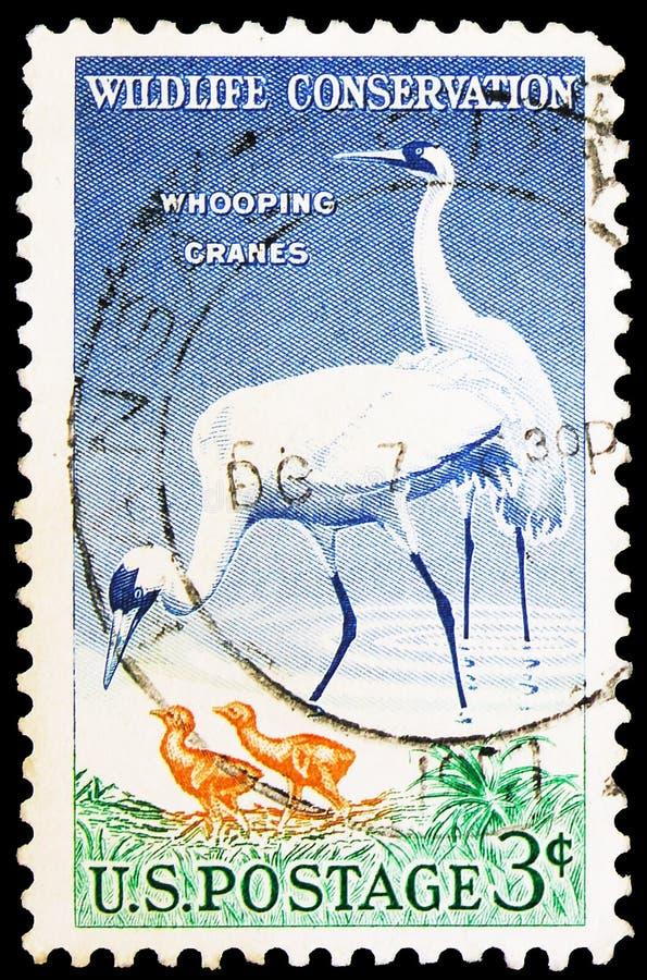 Почтовая марка, напечатанная в США, показывает Whooping Crane (Grus americana), Wildlife Conservation Issue serie, около 1957 стоковое изображение