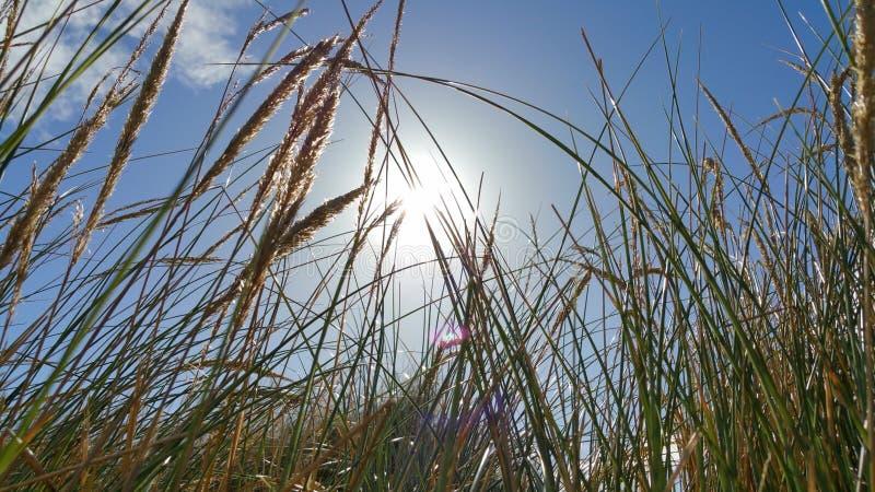 пошатывая ветер стоковое фото rf