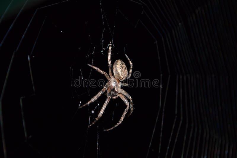 паук стоковое изображение