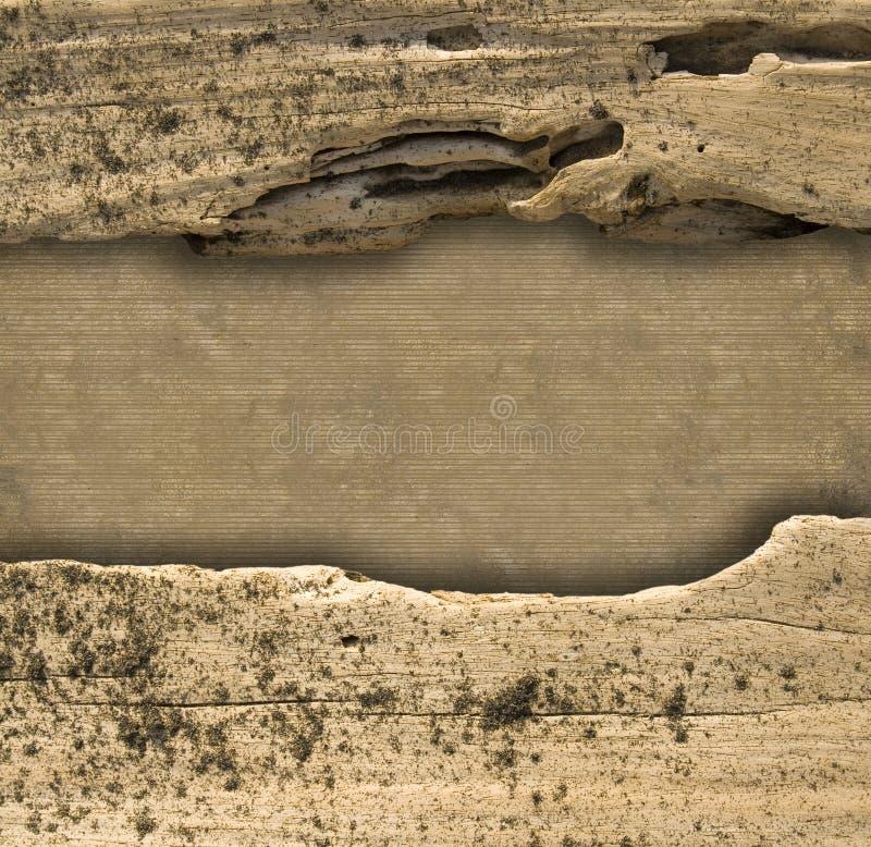 пошущенное над естественное driftwood рассекателя предпосылки стоковое изображение rf