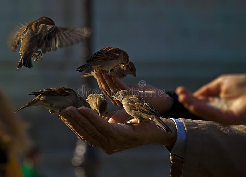 Подавать птиц стоковая фотография rf