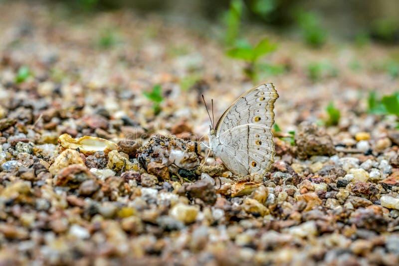 Подавая бабочка стоковые изображения