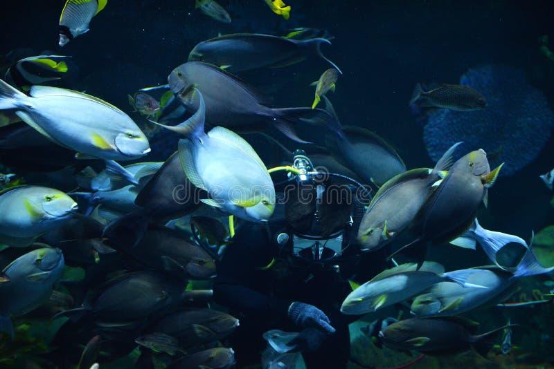 Подавая рыбы в море стоковое фото