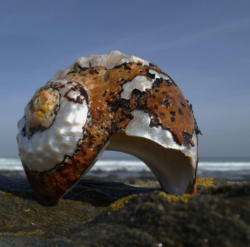 Подарок от океана стоковое фото rf