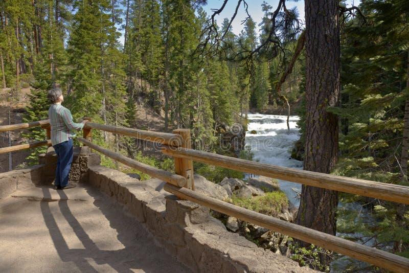 Подача реки и централь Орегон леса стоковое фото