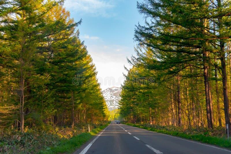 По-видимому бесконечная дорога асфальта во время захода солнца строка деревьев вдоль проселочной дороги в сельской местности стоковое изображение