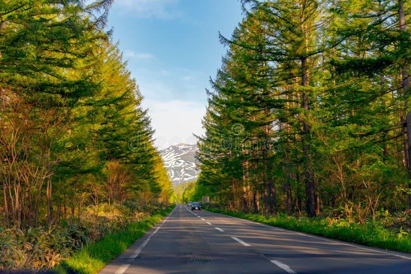 По-видимому бесконечная дорога асфальта во время захода солнца строка деревьев вдоль проселочной дороги в сельской местности стоковое изображение rf
