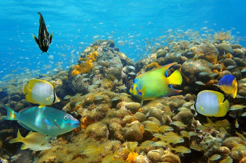 Подводная жизнь в коралловом рифе с много рыб стоковая фотография rf