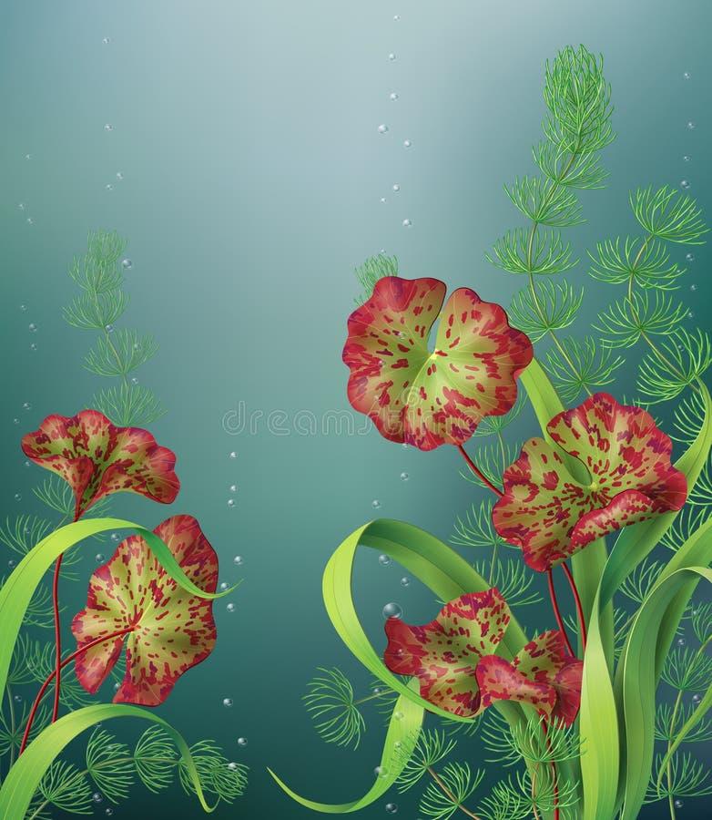 Подводная предпосылка с аквариумными растениами бесплатная иллюстрация