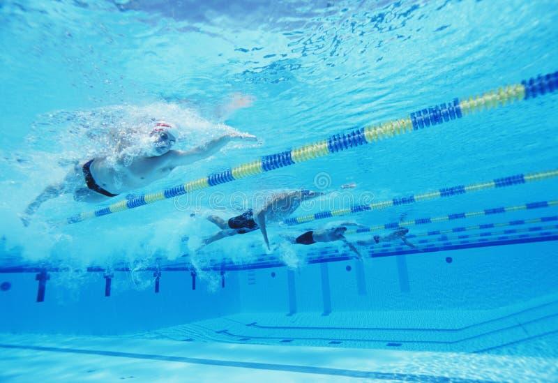 Подводная съемка 4 мужских спортсменов состязаясь в бассейне стоковое фото rf