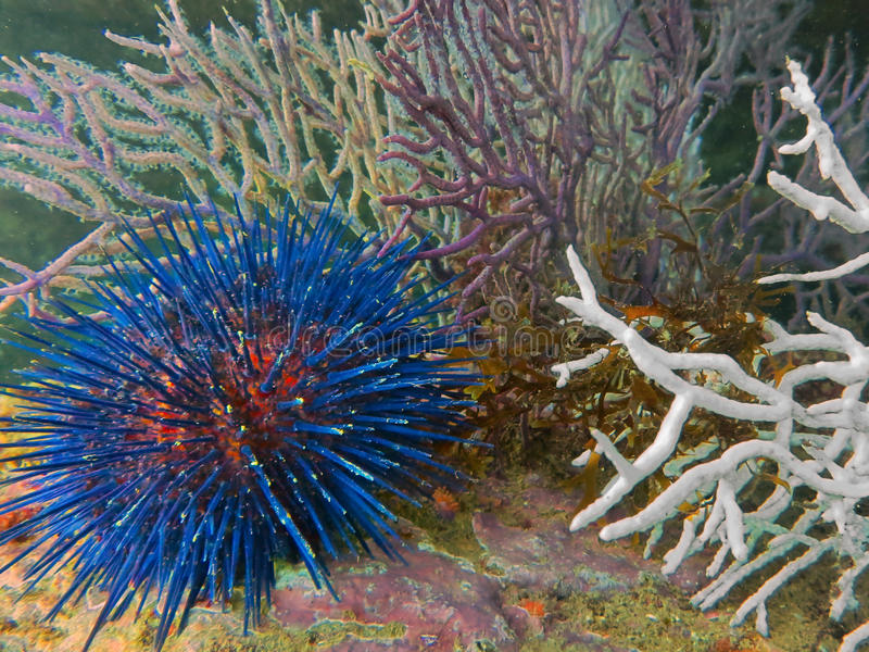 подводно стоковое изображение