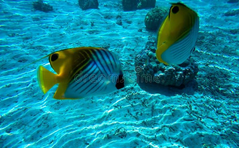 Подводный ландшафт в полинезии стоковое изображение