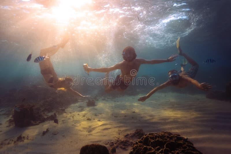 Подводный всход стоковые изображения rf