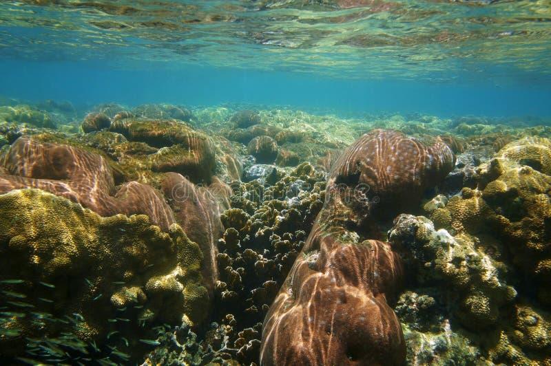 Подводный коралловый риф близко к поверхности воды стоковые фото