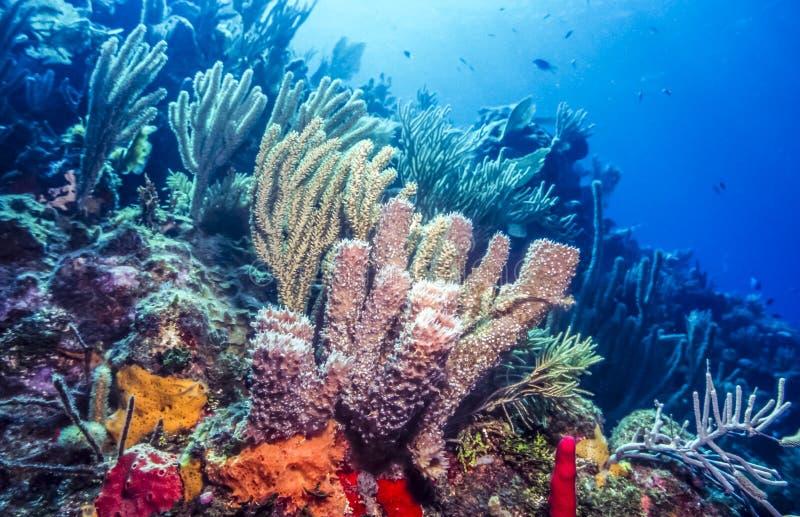 Подводный коралловый риф стоковые фото