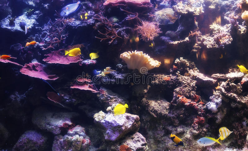 Download Подводный мир стоковое изображение. изображение насчитывающей море - 33732099