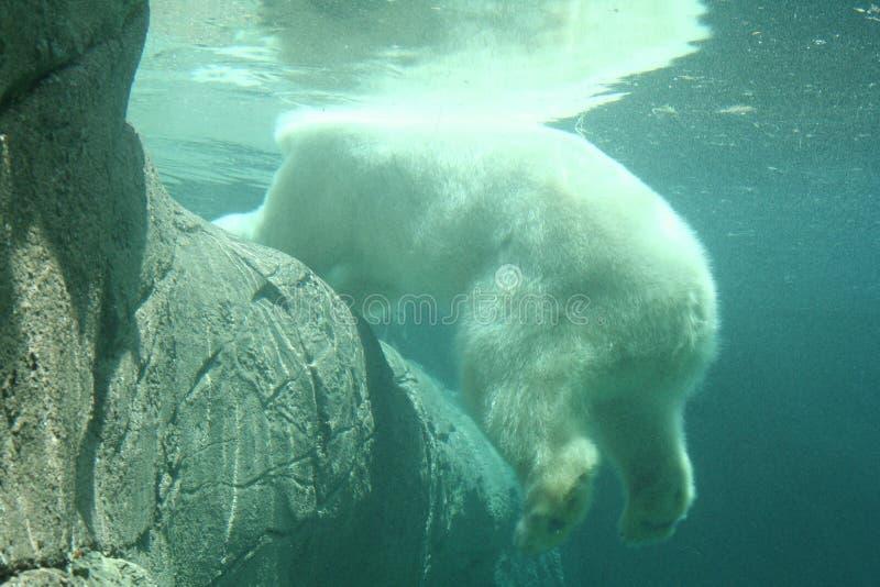 под водой стоковое фото