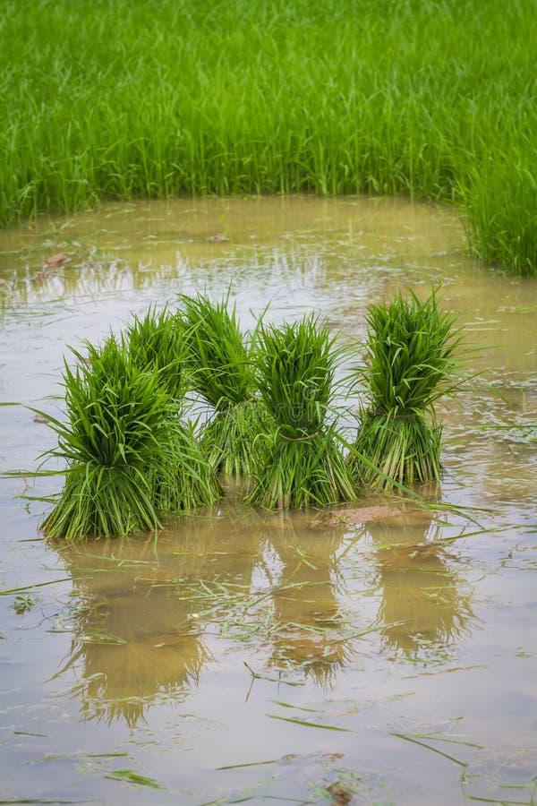Download Подготавливать росток для засаживать Стоковое Фото - изображение насчитывающей свеже, росток: 40591102