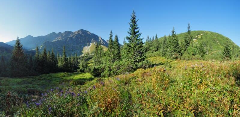 Полевой цветок в зеленой горе леса, Tatras, Словакии стоковая фотография rf