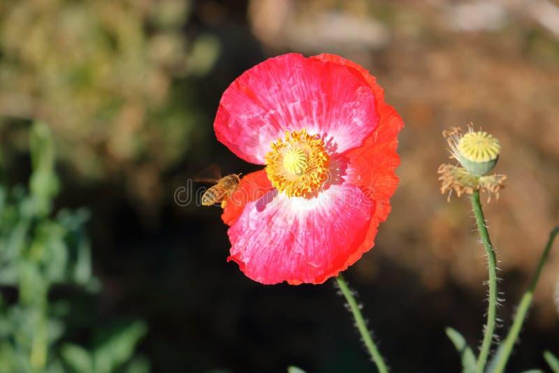 Полевой цветок оси летания причаливая стоковая фотография