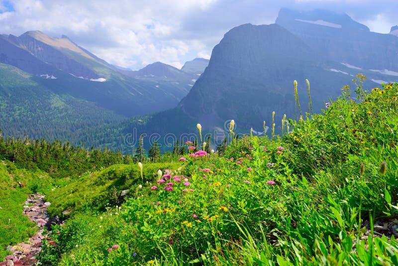 Полевые цветки и высокий высокогорный ландшафт ледника Grinnell отстают в национальном парке ледника, Монтане стоковое изображение rf