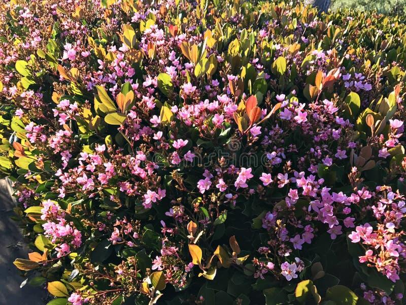 Полевые цветки на пляже malibu стоковое фото