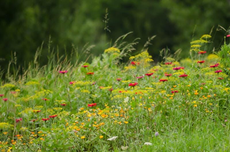 Полевые цветки стоковое фото rf