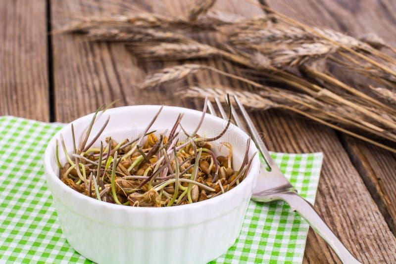 Полезные прорастанные продовольственные зерна стоковые изображения