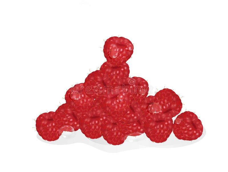 Поленика зрело ягод Ягоды бесплатная иллюстрация
