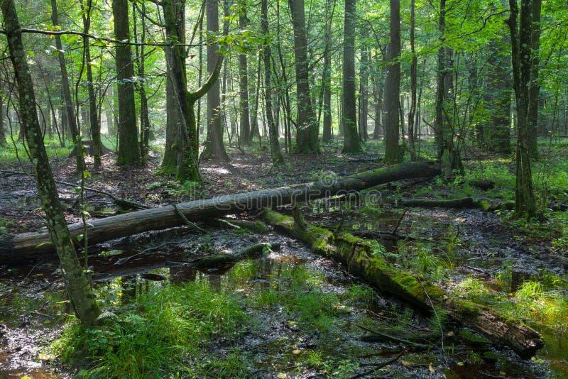 Полдень лета при свет входя в богатую лиственную стойку стоковые изображения rf
