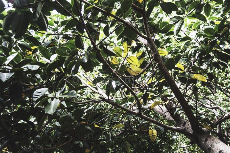 Под деревом стоковые фотографии rf