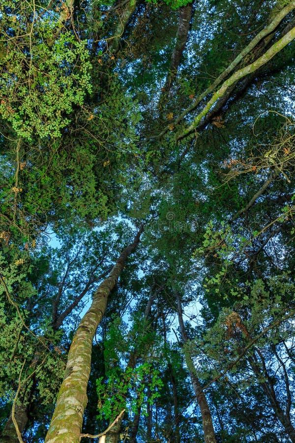Под лесом бука стоковые изображения