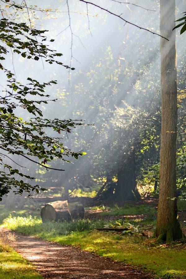 Полесье Smokey стоковые изображения rf
